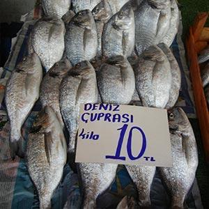 Flashheart lots of fish dating